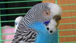 Распространенные заболевания у домашних птиц (попугаев)