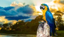 Экзотические породы попугаев: правила содержания, ухода и питания