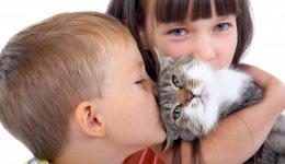 Котяча любов. Яка вона буває?