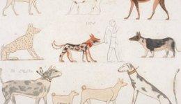 Найдавніші породи собак