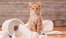 Як привчити кота ходити в туалет