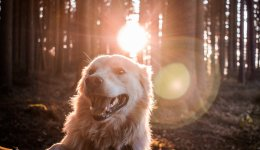 Тривалість життя собак