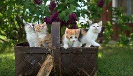 Тривалість життя котів