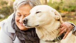 Взять собаку из приюта: несколько советов для успешного усыновления