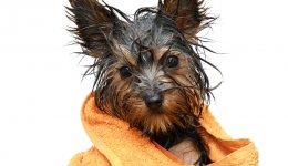 Лучшие советы по уходу и купанию собаки. Груминг в домашних условиях