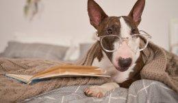 Собаки для квартири