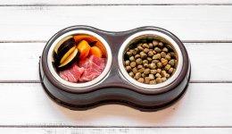 Сухой корм или натуральную пищу? Рацион собак.
