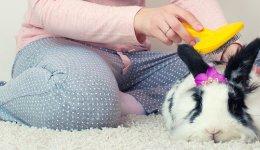 Догляд за декоративними кроликами