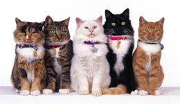 Самые популярные породы кошек XXI столетия