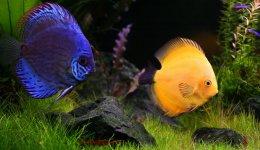 Как заботиться об аквариумной жизни: советы новым владельцам рыб