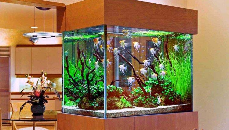 Як піклуватися про акваріумне життя: поради новим власникам риб