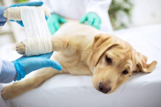 Артрит у собак - бич 21 століття?