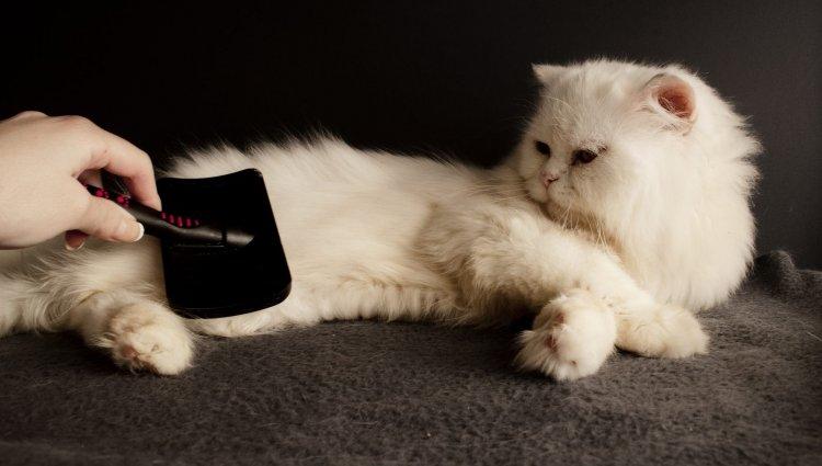 Стрижка кошки. Как ухаживать за шерстью кота?