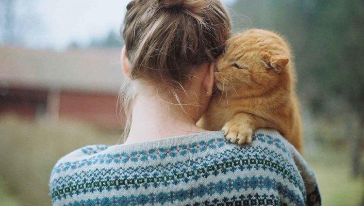 Кошачья любовь. Какая она бывает?