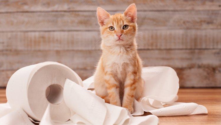 Как приучить кота ходить в туалет
