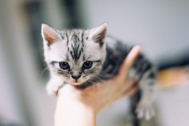 Что делать если у Вашего котёнка диарея?
