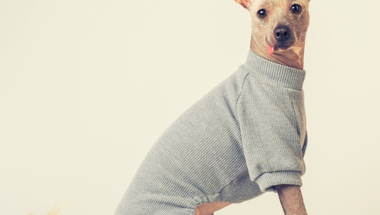 Випадає шерсть у собаки